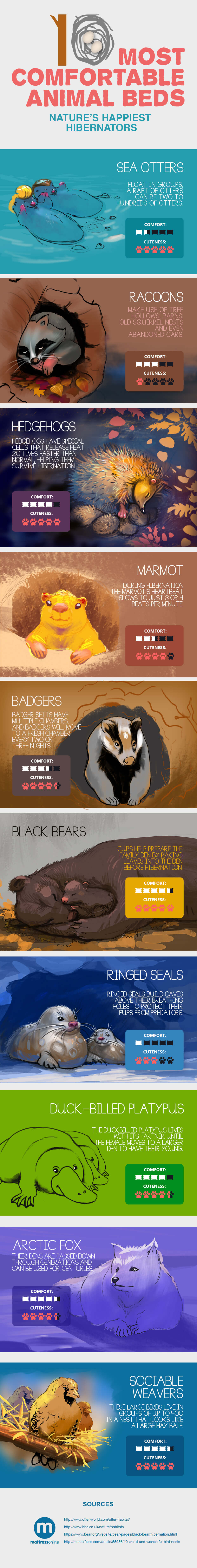 10 of Nature's Happiest Hibernators [Infographic] | ecogreenlove