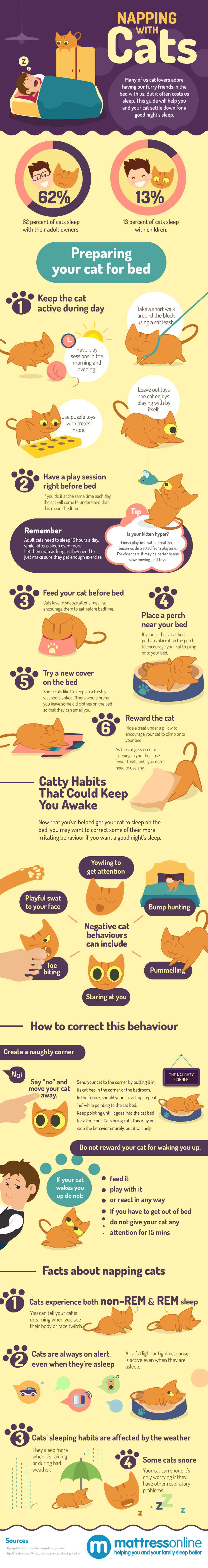 Napping with Cats infographic