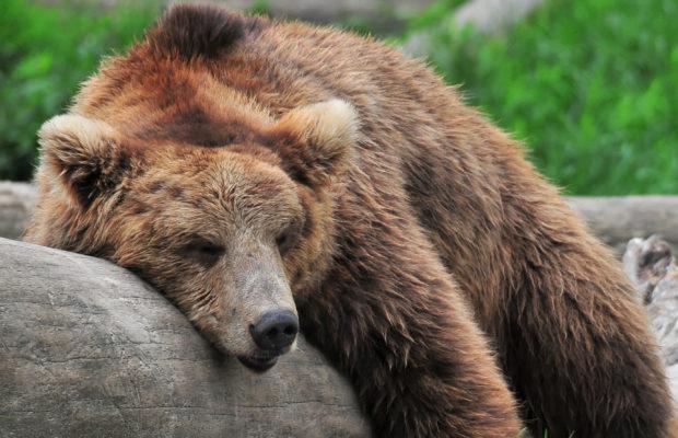 7 Animals with Amazing Sleep Habits
