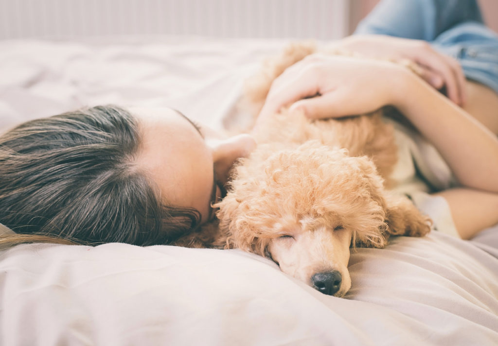Relationships On Paws: The Debate Over Pets In The Bed